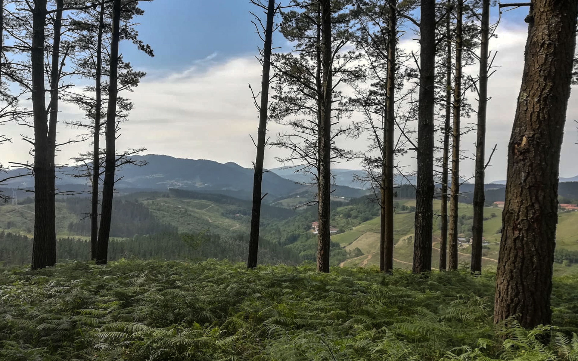 """Foto bosque """"Bai, basoa bebai"""""""
