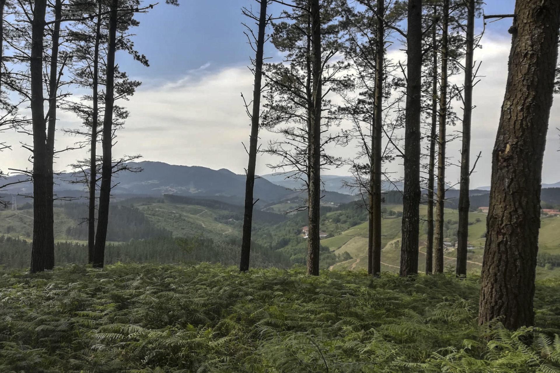 Foto bosque